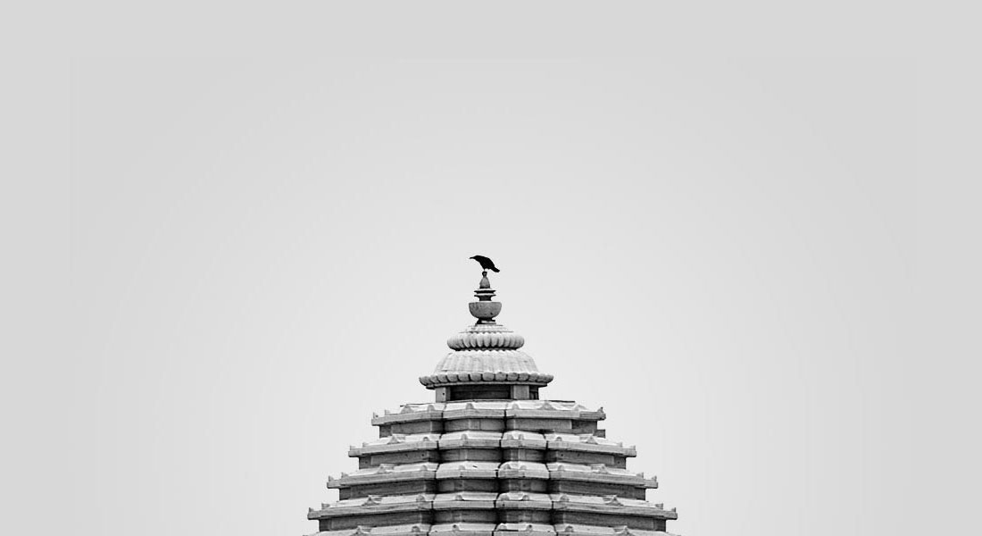 Photo of a crow in Jaipur, India
