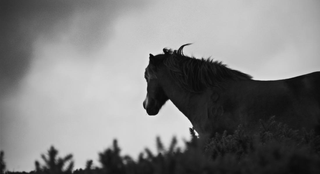 Photo of a Pony in Exmoor, England